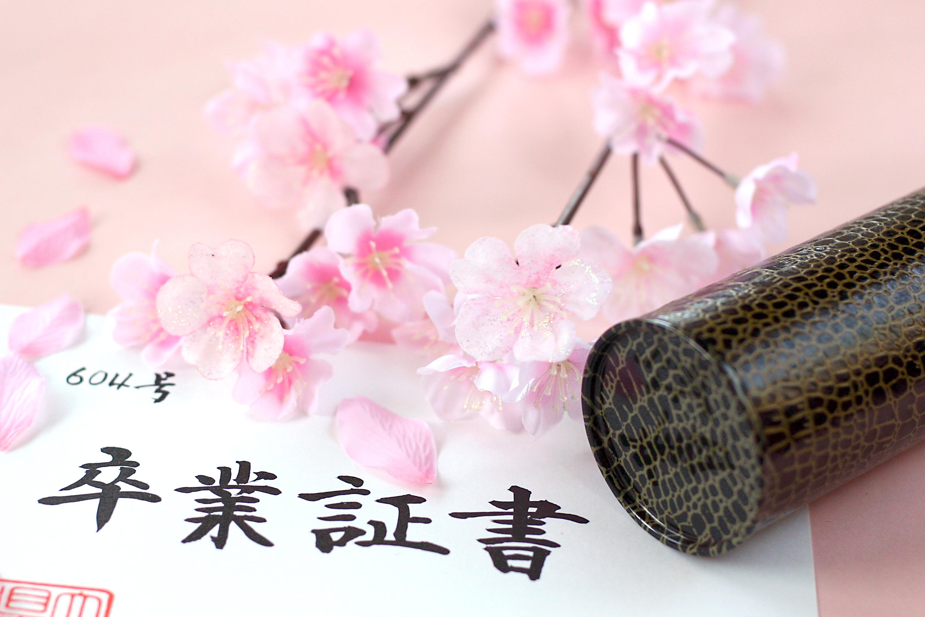 京都の桜も綺麗でした。